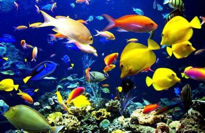 بعض الأسماك تغيير جنسها