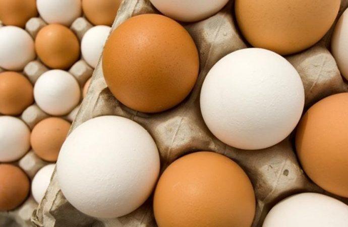 فائدة طبية لقشر البيض