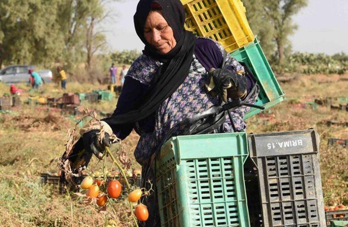 المرأة الريفية عاملة معطاءة في البيادر والمعامل