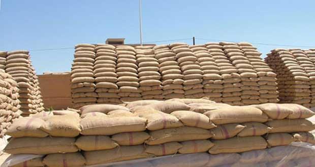 استلام القمح والشعير من الحقول الإكثارية