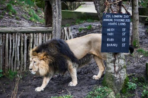 كورونا يصيب أقدم حديقة حيوان