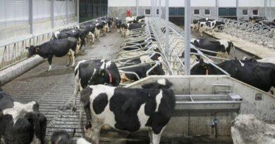 ارتفاع أسعار العلف يهدّد مشاريع الثروة الحيوانية الصغيرة بالزوال!