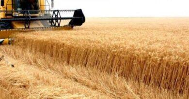 """الفلاحون يحصدون الخيبة من """"عام القمح"""".. أراض قاحلة ومراكز فارغة ولا مفرّ من الاستيراد!"""